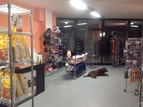 Washer dryer for dog di gualtiero pirovano lavaggio self for Arredamenti pirovano
