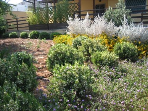 Otra giardini atmosfere progettazione giardini realizzazione giardini realizzazione piscine - Piante mediterranee da giardino ...